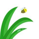 Świeży zielonej trawy badyla zakończenie up Wodny kropla set Latający honeybee pszczoły insekt Fotografia Royalty Free
