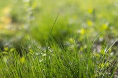 Świeży zielonej trawy bokeh tło Zdjęcie Stock