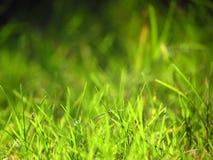 Świeży zielonej trawy tło Obraz Stock