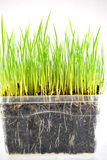 Świeży zielonej trawy tło Obrazy Stock