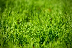 Świeży zielonej trawy zakończenie up, selekcyjna ostrość Zdjęcie Stock