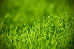 Świeży zielonej trawy zakończenie up, selekcyjna ostrość Fotografia Stock