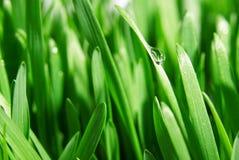Świeży zielonej trawy zakończenie up, selekcyjna ostrość Zdjęcia Royalty Free