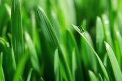 Świeży zielonej trawy zakończenie up, selekcyjna ostrość Zdjęcia Stock