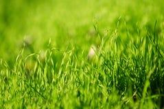 Świeży zielonej trawy zakończenie up, selekcyjna ostrość Fotografia Royalty Free