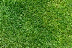 Świeży zielony łąkowej trawy odgórny widok obrazy royalty free