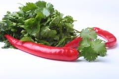Świeży zielony cilantro, kolenderów liście i chili pieprz odizolowywający na białym bacground, Obrazy Stock