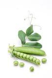 świeży zielony groch Zdjęcia Stock