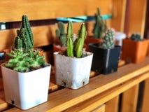Świeży zielony kaktus w plastikowym garnku Obraz Stock