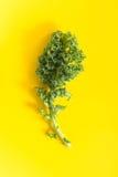 Świeży zielony kale liść na żywym tle, Obrazy Stock