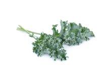 Świeży zielony kale na białym tle Obrazy Stock