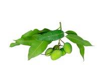świeży zielony mango Zdjęcie Royalty Free