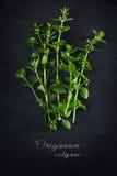 Świeży zielony oregano od above na ciemnym łupku talerzu, próbki tex obrazy stock