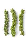 świeży zielony pieprz zawiązuje niedojrzałego Zdjęcia Stock