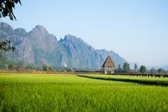 Świeży Zielony ryżu pole przeciw górze Obrazy Royalty Free