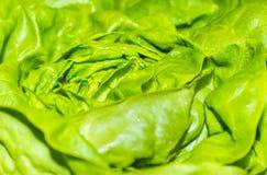 Świeży zielony sałaty sałatki tło Fotografia Royalty Free