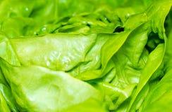 Świeży zielony sałaty sałatki tło Obraz Royalty Free