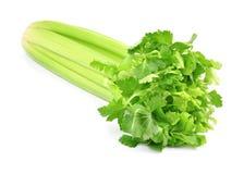 Świeży zielony seler Zdjęcia Stock