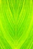 świeży zielony urlop Fotografia Royalty Free