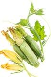 Świeży zucchini, zieleni gałąź z liśćmi i okwitnięcia, Zdjęcie Royalty Free