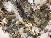 świeżych krabów Zdjęcia Stock