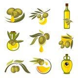 Świeżych oliwnych owoc i nafcianych butelek symbole Fotografia Royalty Free