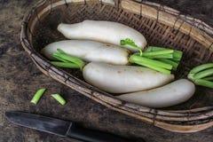 Świeżych plasterków biała rzodkiew, zdrowy vegatable zdjęcie stock