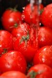 świeżych pomidorów zdjęcia royalty free