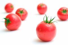 świeżych pomidorów Obrazy Stock