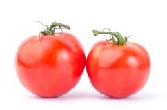 świeżych pomidorów Zdjęcie Royalty Free