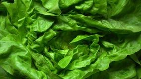 Świeżych sałata sałatkowych liści odgórny zbliżenie zbiory wideo