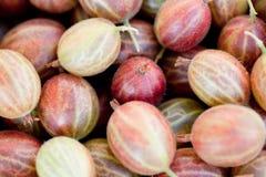 Świeżych smakowitych agrestów makro- zbliżenie na targowy plenerowym Obrazy Stock