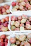 Świeżych smakowitych agrestów makro- zbliżenie na targowy plenerowym Fotografia Stock