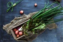 Świeżych warzyw składniki dla gotować na ciemnym tle, odgórny widok Obraz Stock