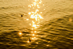 Świecenie od słońca Obrazy Stock