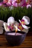 świeczka kwitnie storczykowego zdrój zdjęcia royalty free