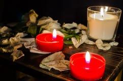 świeczki liść wzrastali Obrazy Stock