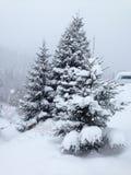 Świerczyna i inni drzewa zakrywający z śniegiem w drewnach przy krawędzią Zdjęcie Stock