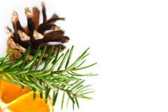 Świerczyna lub sosny gałąź z pomarańcze i pinecone Obrazy Stock