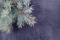 Świerczyna rozgałęzia się lying on the beach na chalkboard Choinki czarny tło nowy rok, Obraz Stock