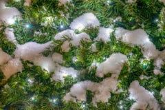 Świerczyna z śniegu i girlandy światłami Obrazy Royalty Free