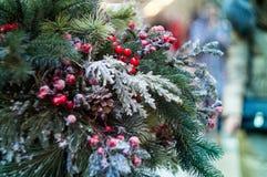 Świerczyny gałąź w śniegu Obraz Royalty Free