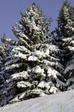Świerczyny pod śniegiem zdjęcie royalty free