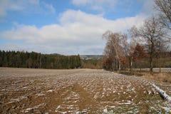 Świerkowa lasu pola kabina zdjęcia royalty free