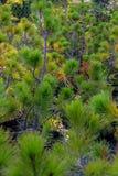 Świerkowe drzewo rośliny obrazy stock
