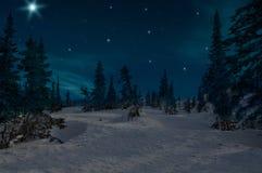 Świerkowe lasowe noc śniegu gwiazdy obraz royalty free