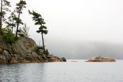 Åšwierkowi drzewa w jeziorze obrazy royalty free