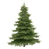 Świerkowy drzewo Odizolowywający Obrazy Royalty Free