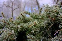 świerkowy drzewo tło szczegółów tekstury okno stary drewniane Jesień w mieście obrazy royalty free