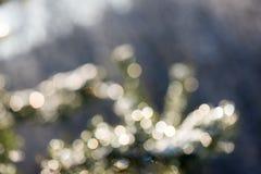 Świerkowy drzewo w zimie z abstrakcjonistycznym plamy boke w świetle słonecznym Zdjęcia Royalty Free